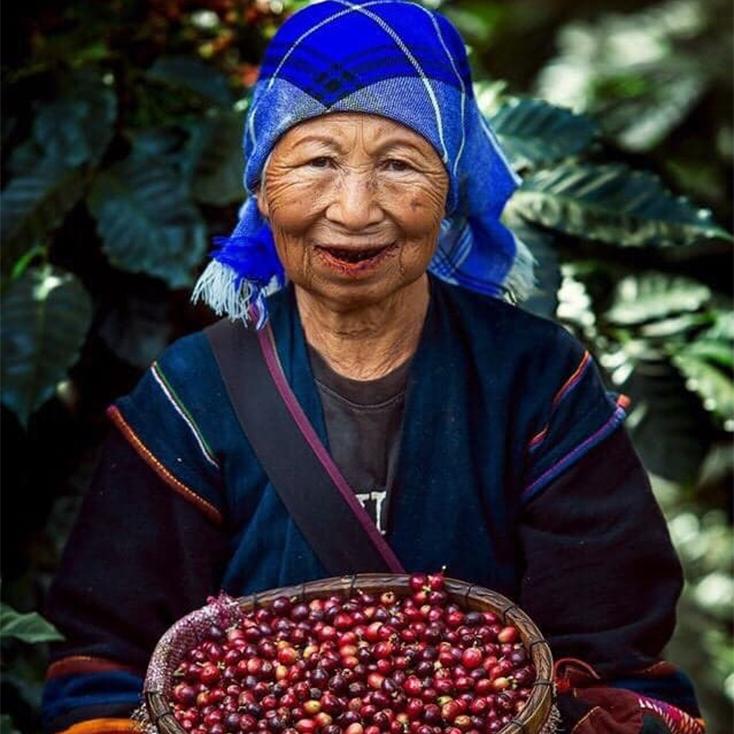 Kaffeebäuerin Thailand Akha Hilltribes